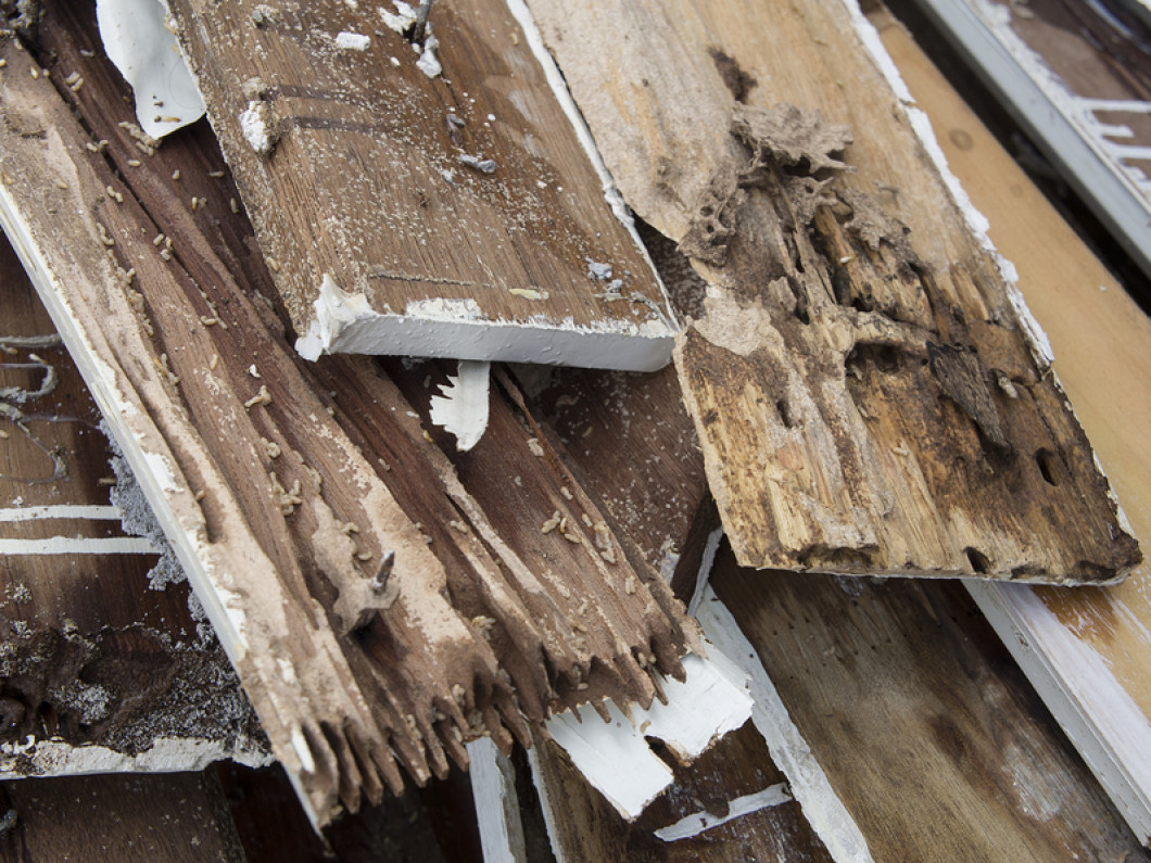 Are Wood Destroying Insects Eating Your Pittston, PA, Home?